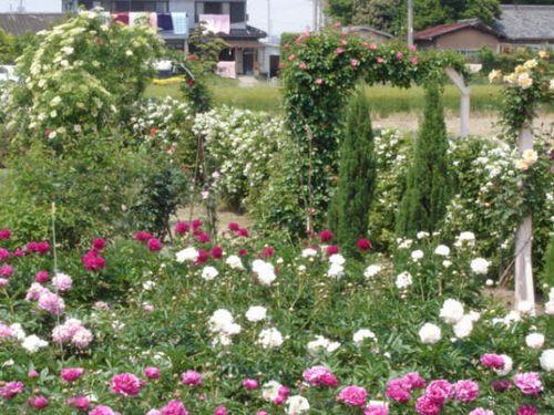 花園を夢見て.JPG
