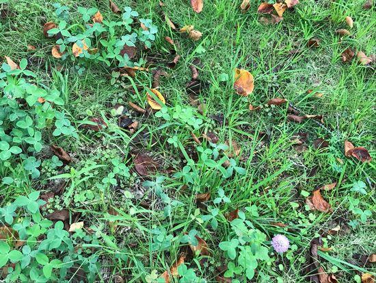 枯れ葉が混じる公園の芝生
